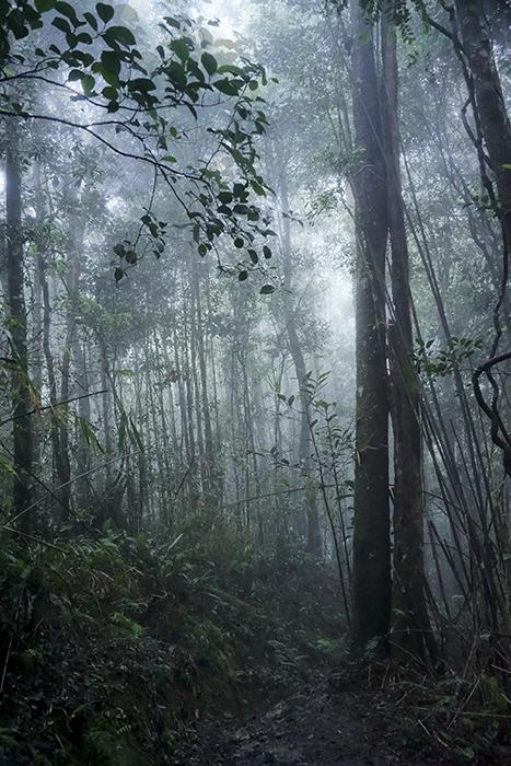 kinabalun kansallispuisto